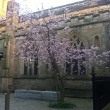 Leicester cathedral with a beautiful tree in flower